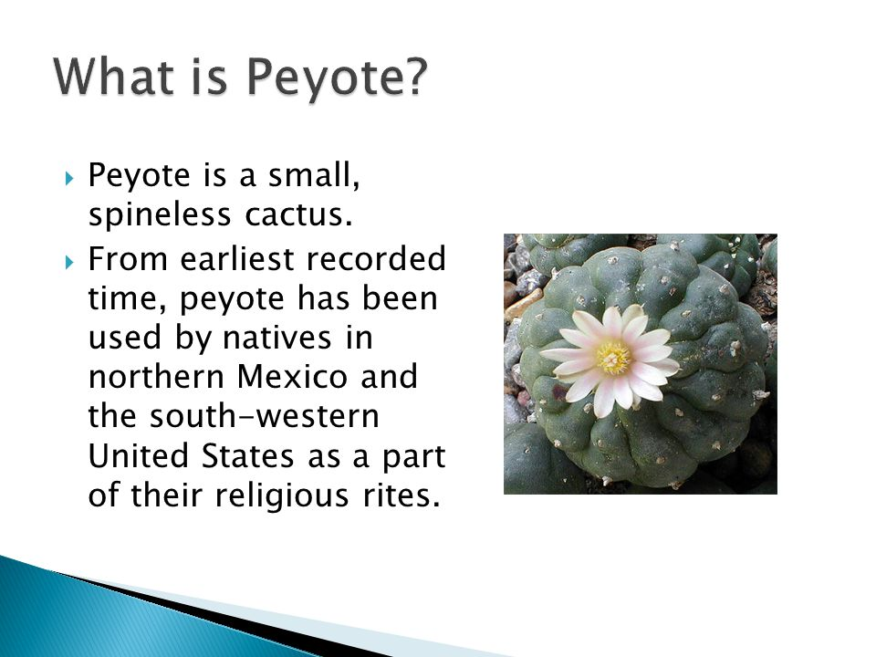 What is Peyote Peyote is a small, spineless cactus.