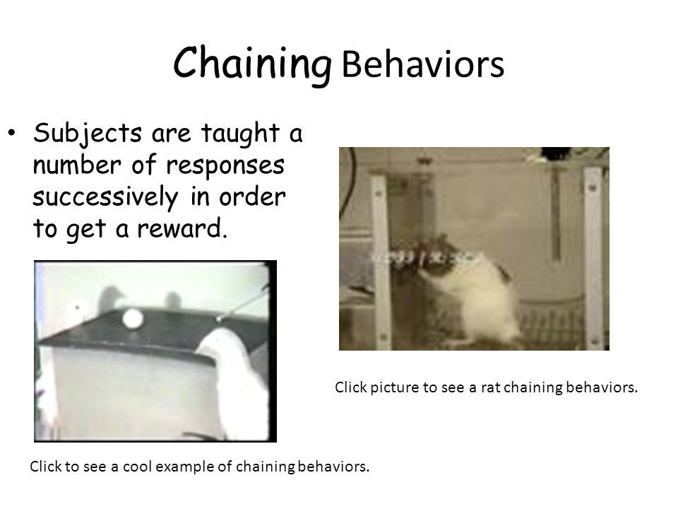 Chaining Behaviors Subjects are taught a number of responses successively in order to get a reward.