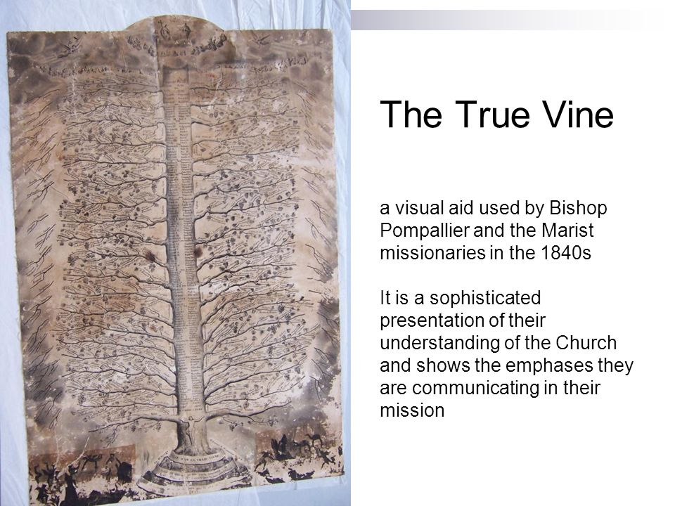 The True Vine a visual aid used by Bishop Pompallier and the Marist missionaries in the 1840s It is a sophisticated presentation of their understanding of the Church and shows the emphases they are communicating in their mission