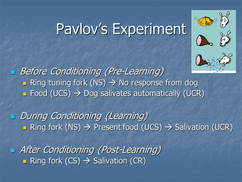 Pavlov's Experiment Before Conditioning (Pre-Learning)