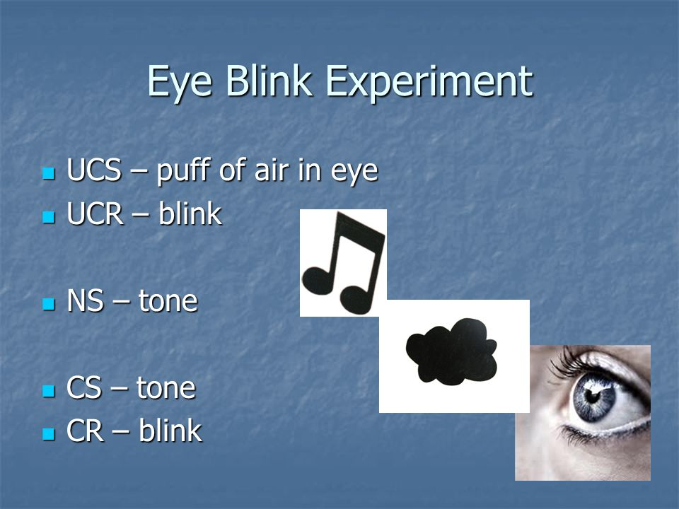 Eye Blink Experiment UCS – puff of air in eye UCR – blink NS – tone