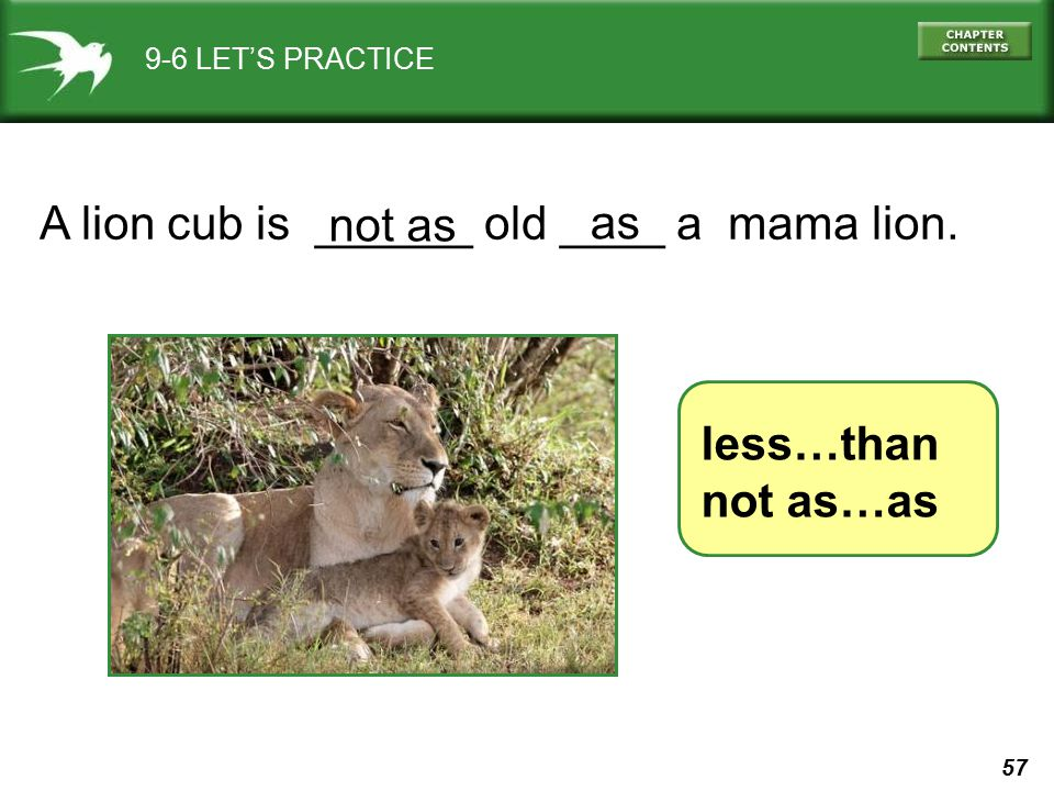 A lion cub is ______ old ____ a mama lion. not as as