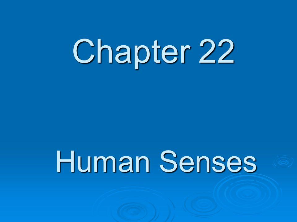 Chapter 22 Human Senses