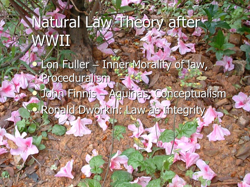 Natural Law Theory after WWII
