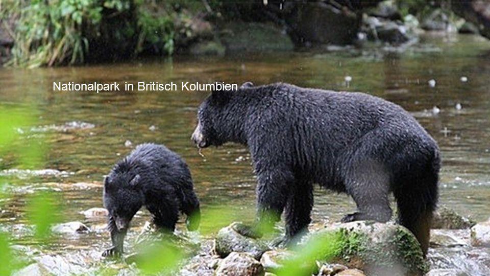 Nationalpark in Britisch Kolumbien