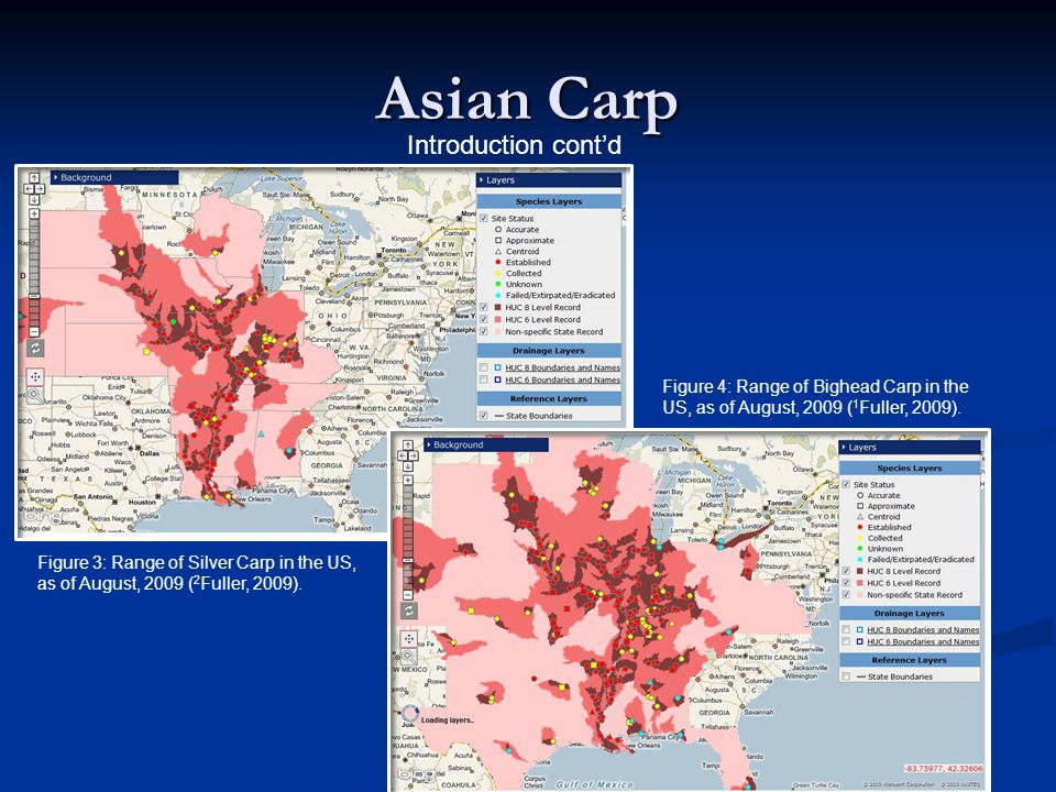 Asian Carp Introduction cont'd