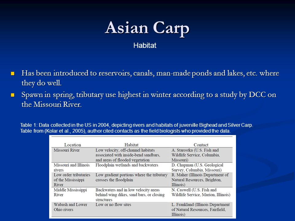 Asian Carp Habitat. Has been introduced to reservoirs, canals, man-made ponds and lakes, etc. where they do well.