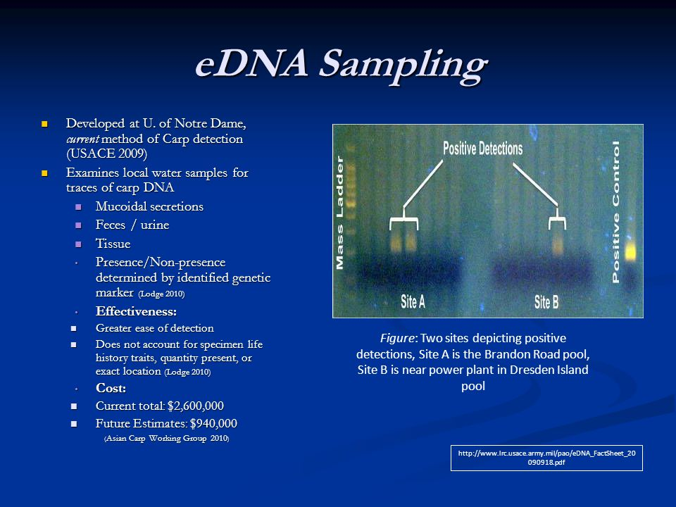eDNA Sampling Developed at U. of Notre Dame, current method of Carp detection (USACE 2009) Examines local water samples for traces of carp DNA.