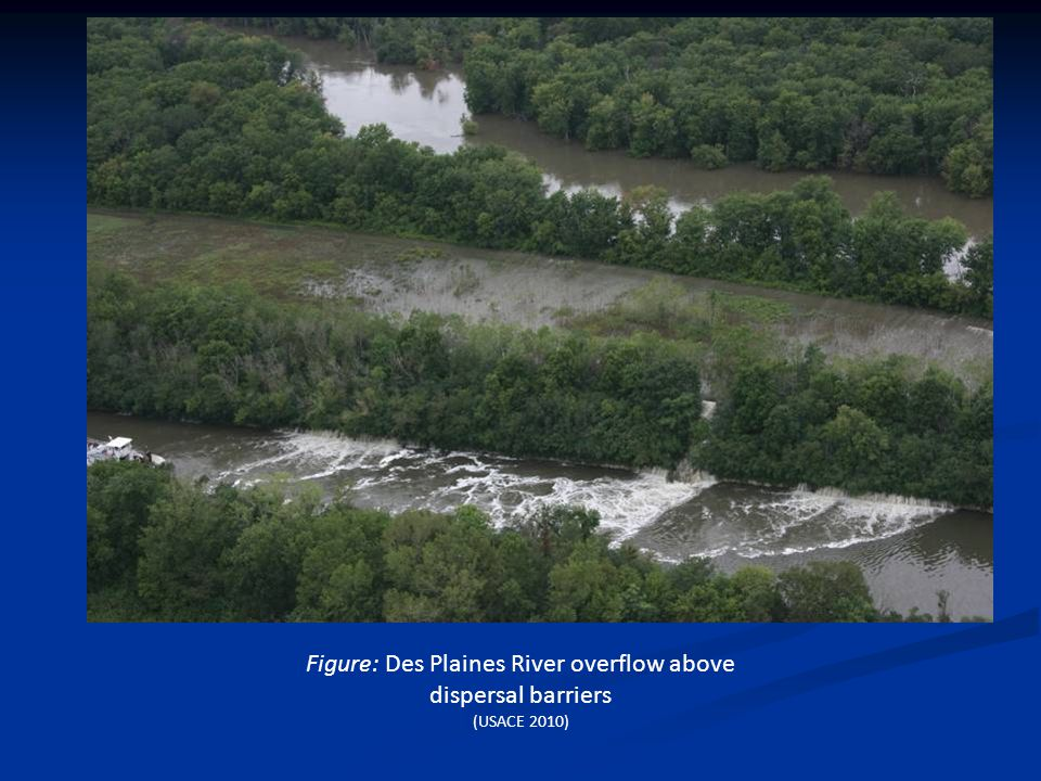 Figure: Des Plaines River overflow above dispersal barriers