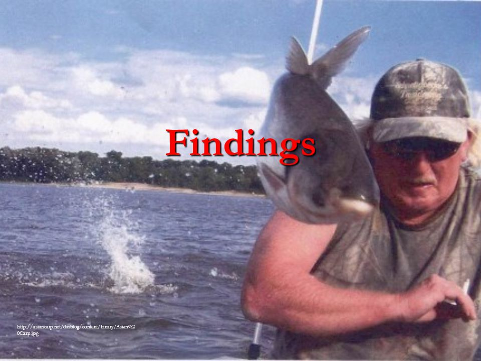 Findings http://asiancarp.net/dasblog/content/binary/Asian%20Carp.jpg