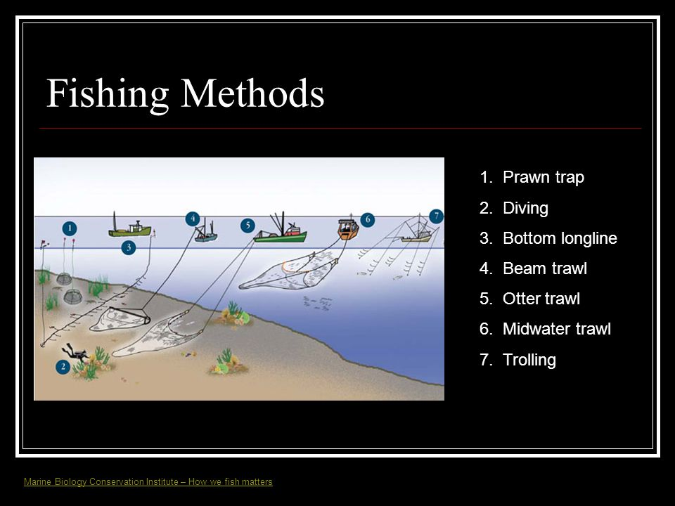 Fishing Methods 1. Prawn trap 2. Diving 3. Bottom longline