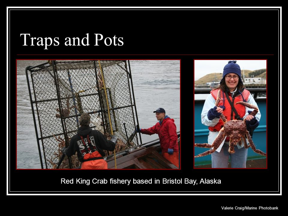Traps and Pots Red King Crab fishery based in Bristol Bay, Alaska