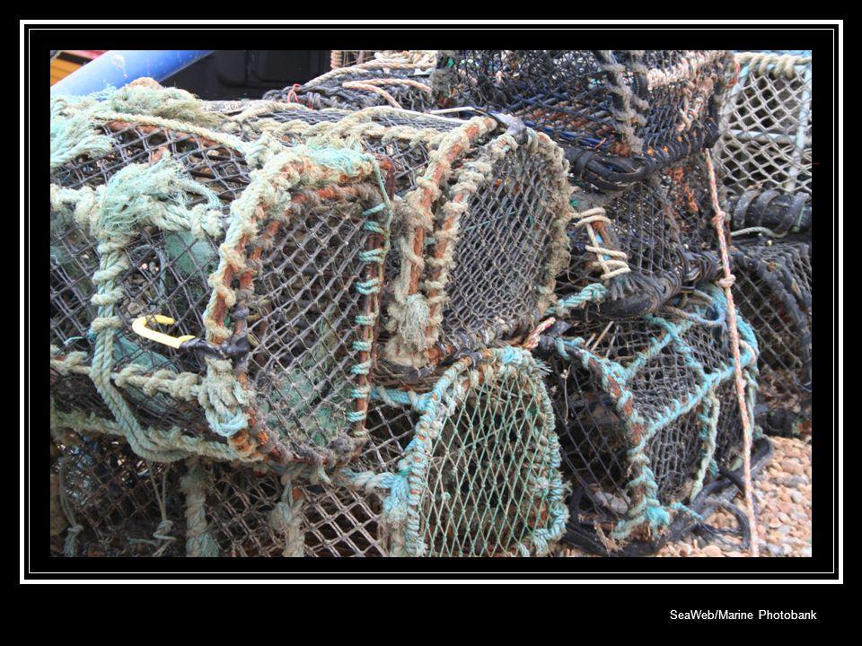SeaWeb/Marine Photobank