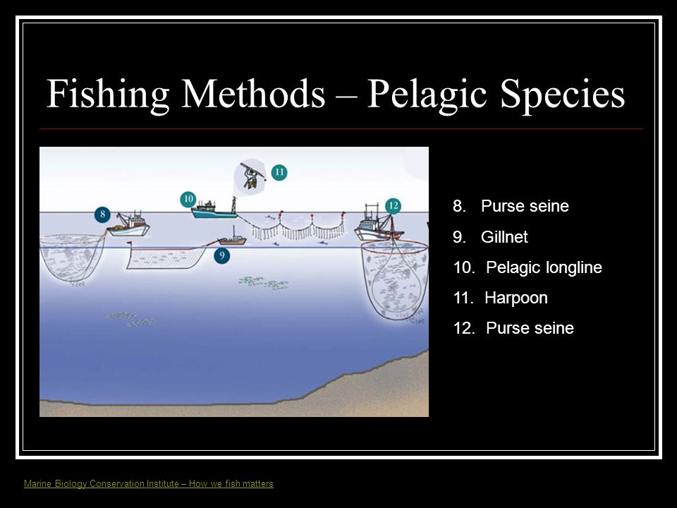 Fishing Methods – Pelagic Species