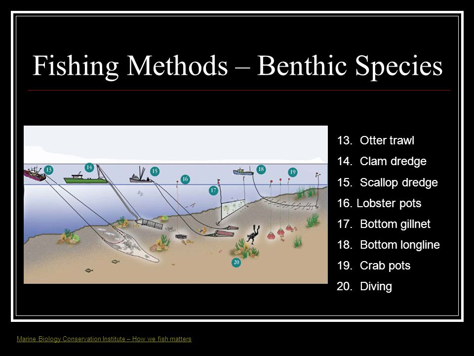 Fishing Methods – Benthic Species