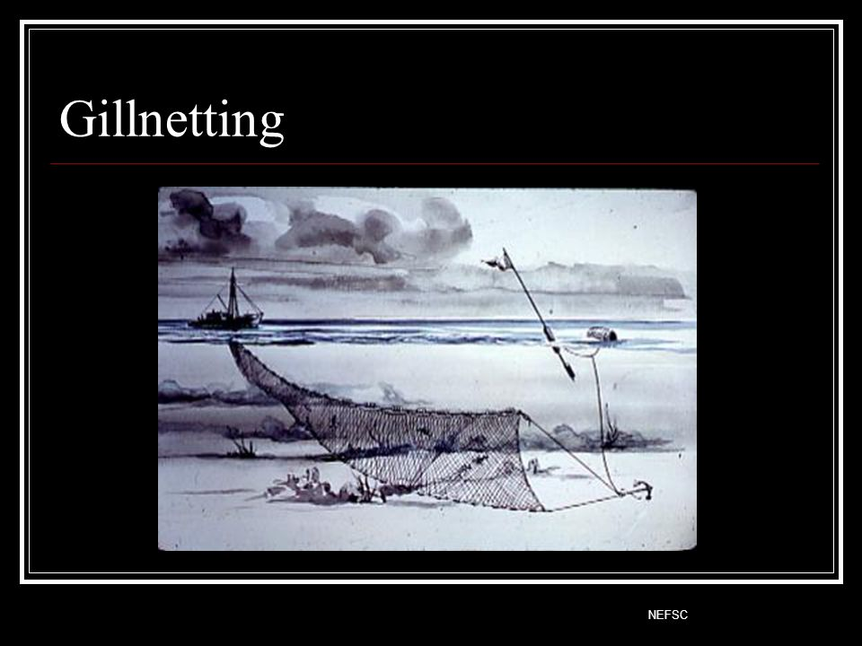 Gillnetting