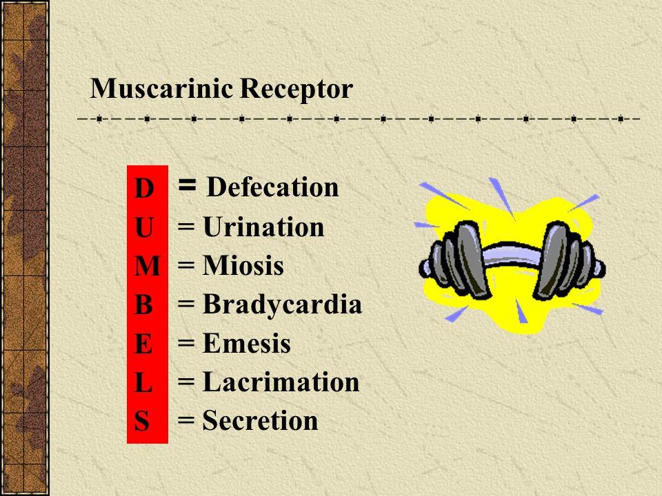 = Defecation Muscarinic Receptor D = Urination U = Miosis M