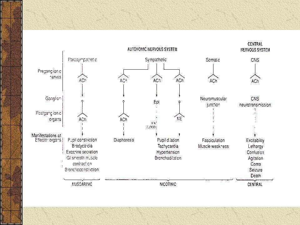 1. Atropine antimuscarinic