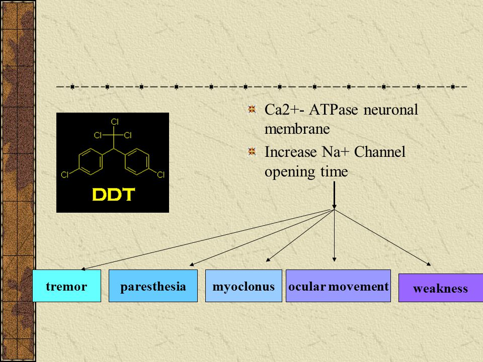 Ca2+- ATPase neuronal membrane Increase Na+ Channel opening time
