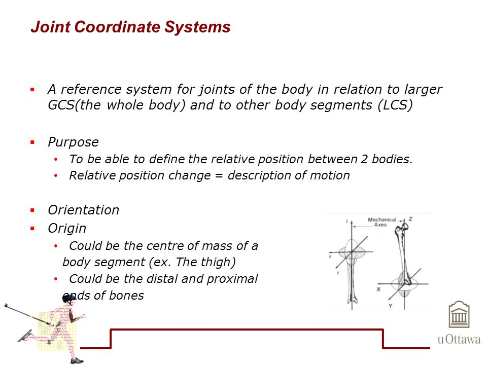 Joint Coordinate Systems