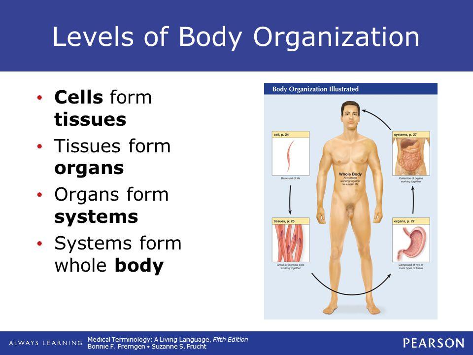Levels of Body Organization