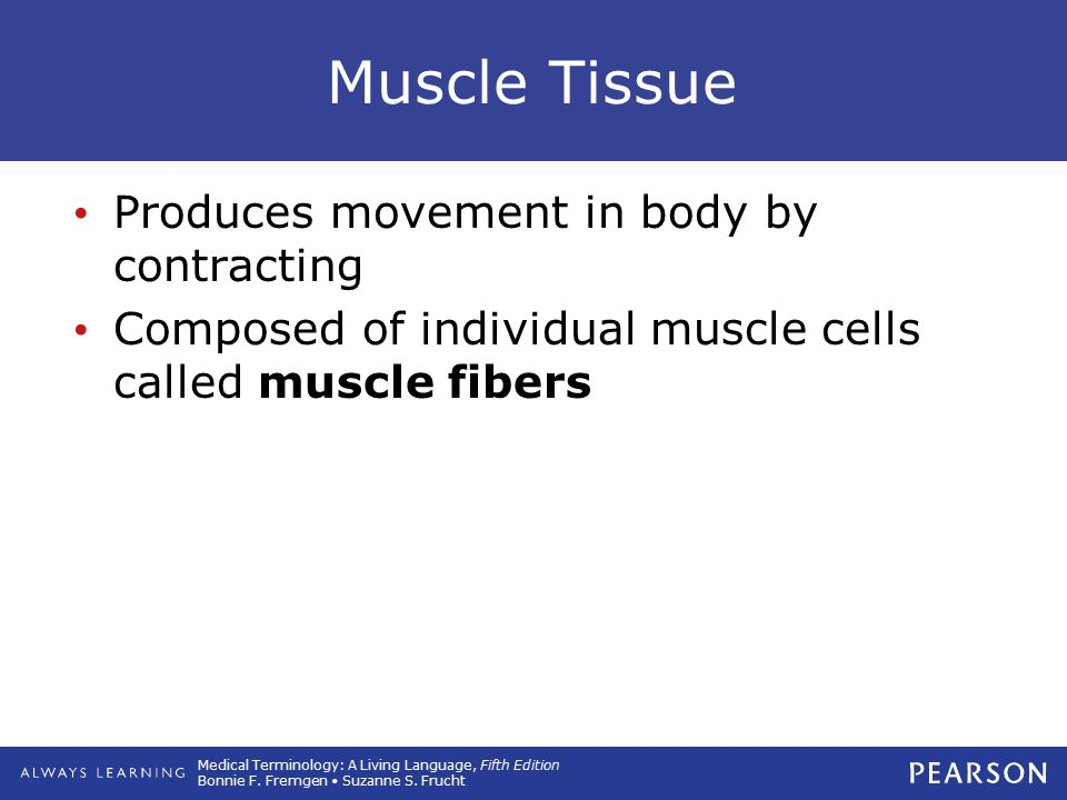 Muscle Tissue Produces movement in body by contracting