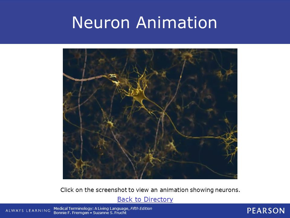 Click on the screenshot to view an animation showing neurons.