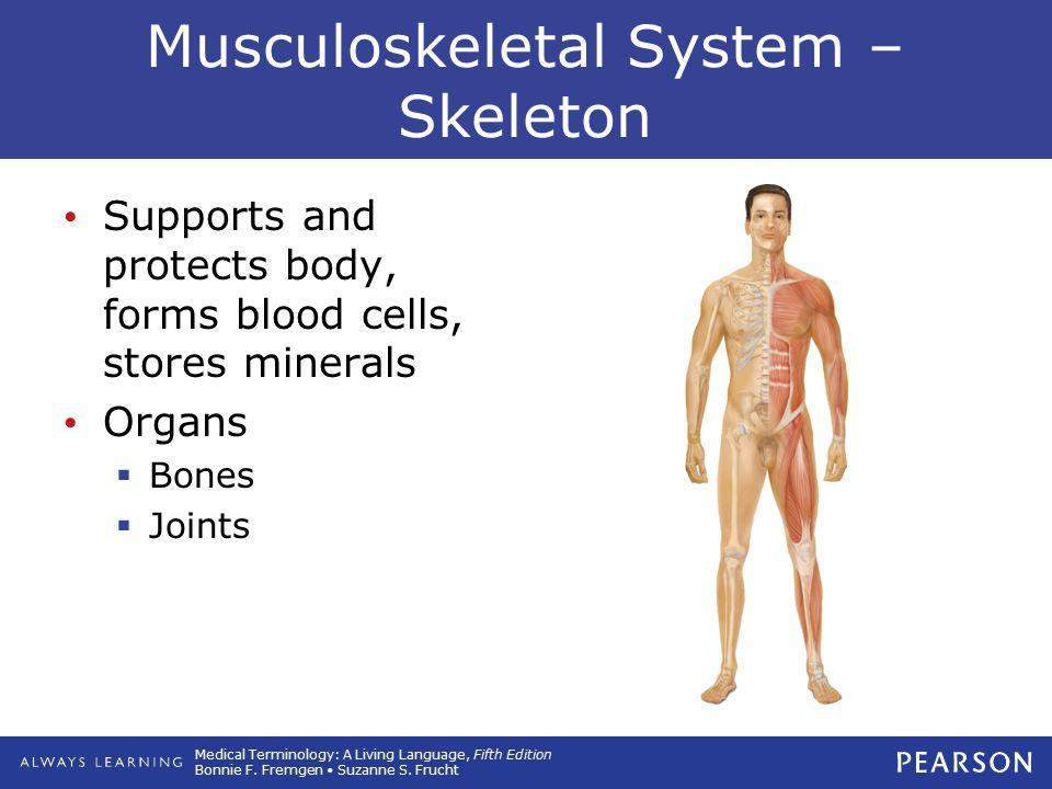 Musculoskeletal System – Skeleton