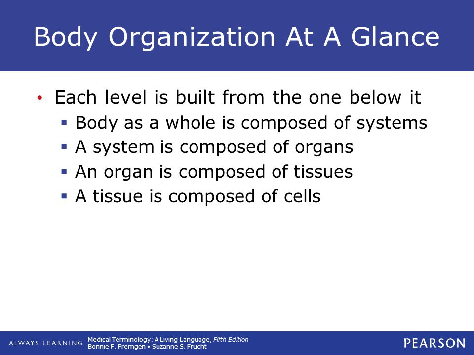 Body Organization At A Glance