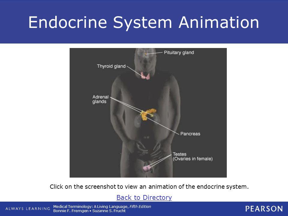 Endocrine System Animation