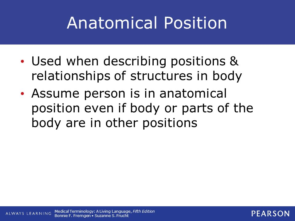 Anatomical Position Used when describing positions & relationships of structures in body.