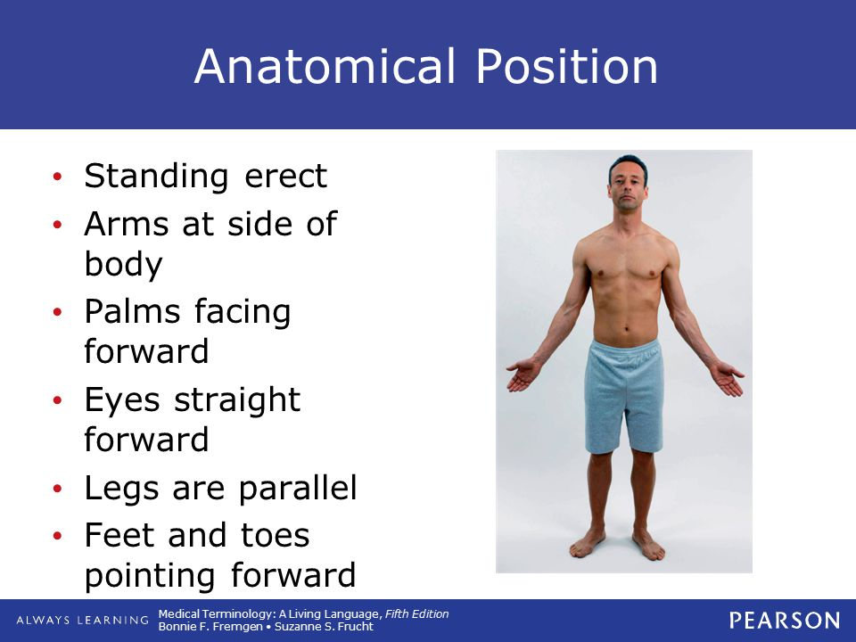 Anatomical Position Standing erect Arms at side of body