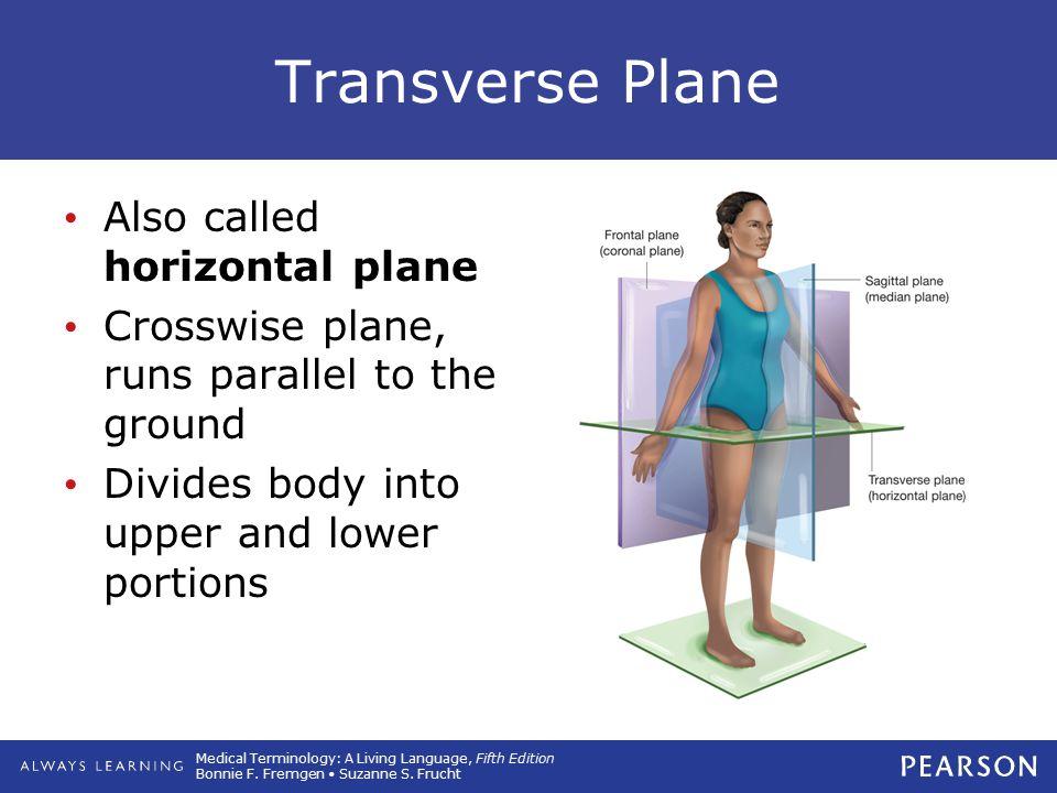 Transverse Plane Also called horizontal plane