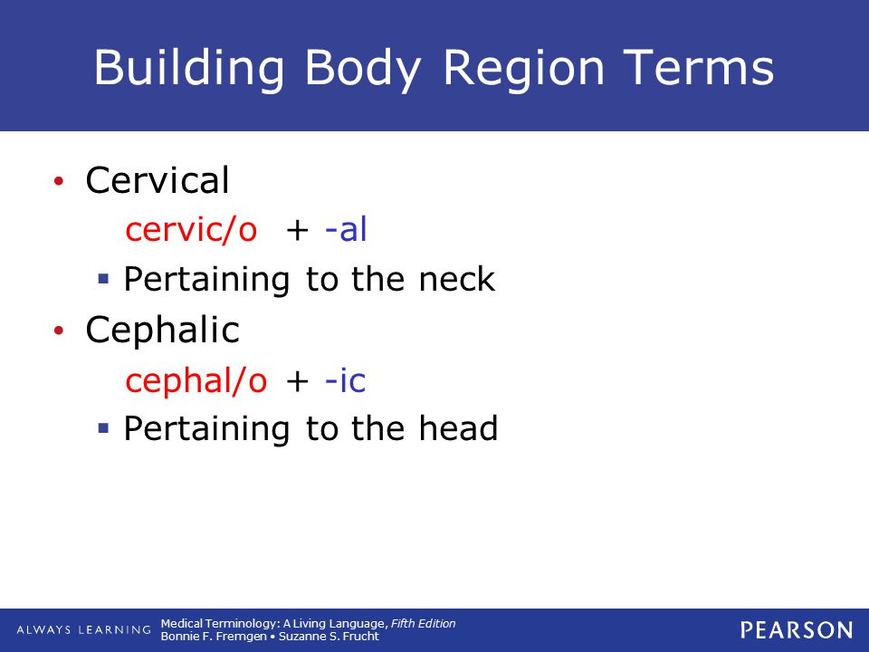 Building Body Region Terms