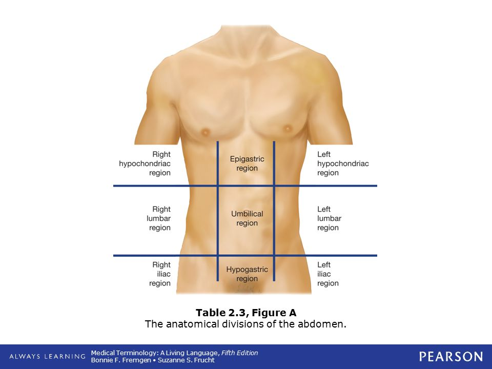 Table 2.3, Figure A The anatomical divisions of the abdomen.