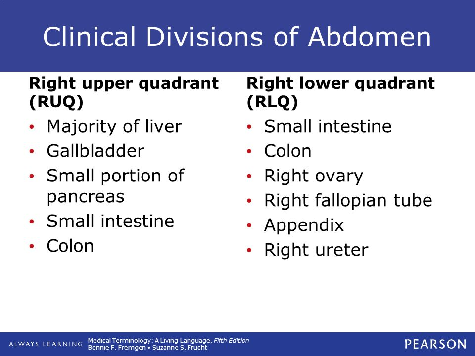 Clinical Divisions of Abdomen