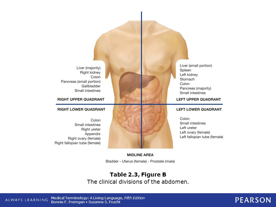 Table 2.3, Figure B The clinical divisions of the abdomen.