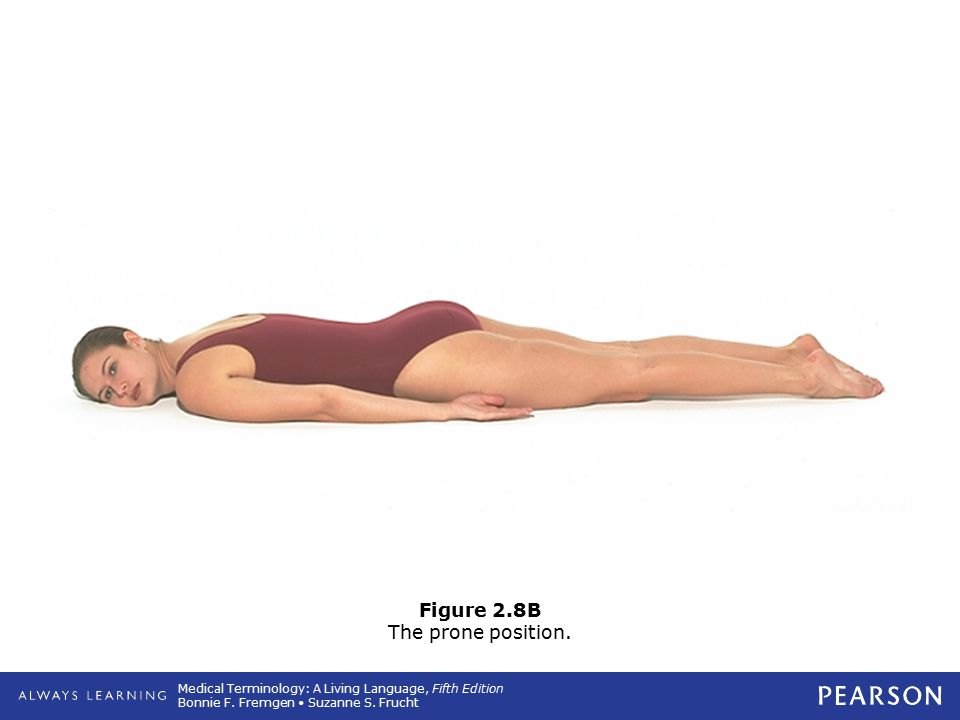 Figure 2.8B The prone position.