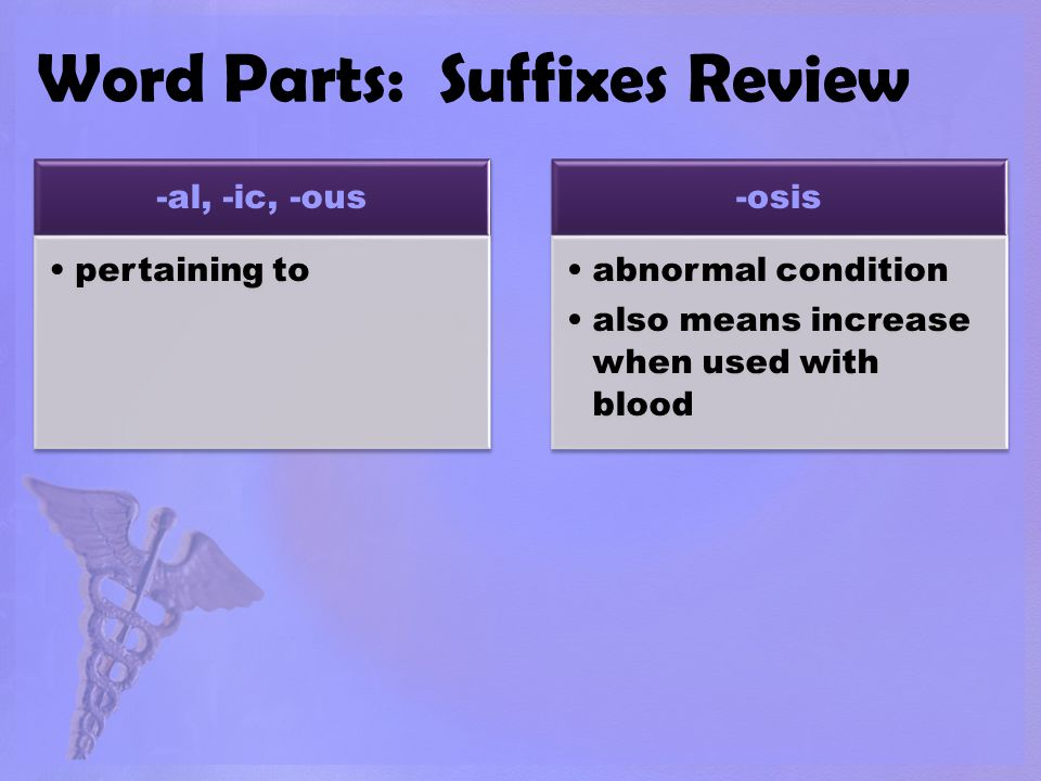 Word Parts: Suffixes Review