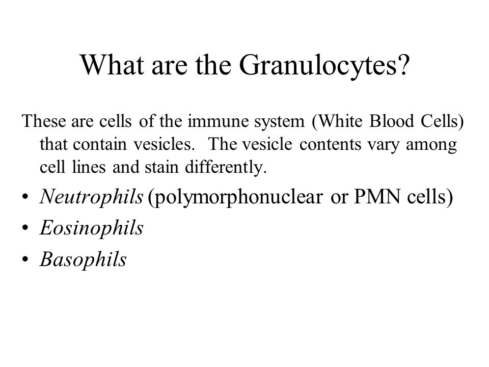 What are the Granulocytes