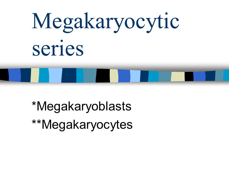 Megakaryocytic series