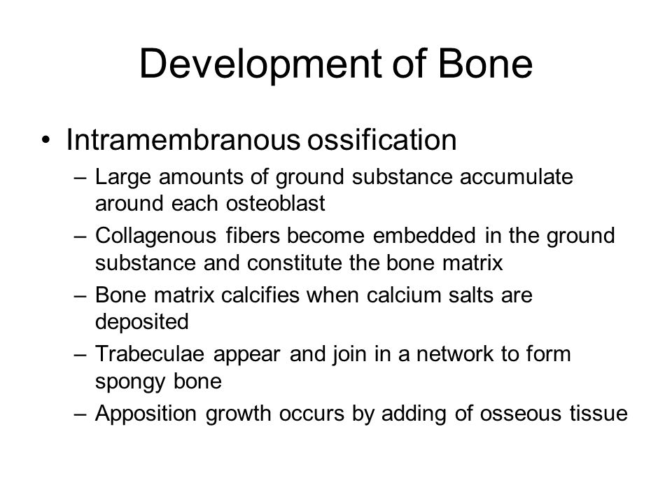 Development of Bone Intramembranous ossification
