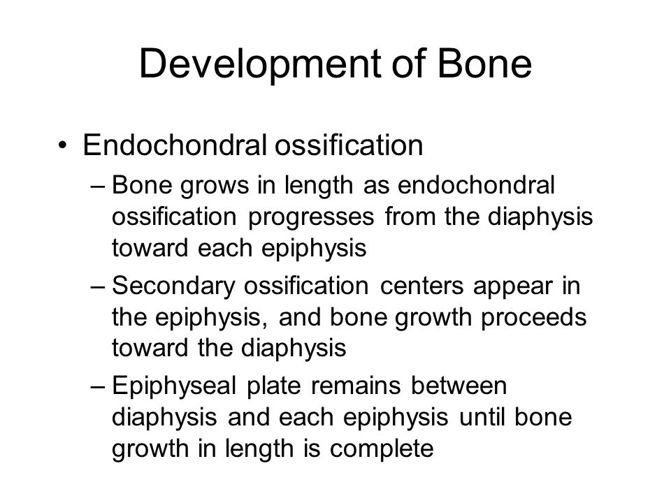 Development of Bone Endochondral ossification