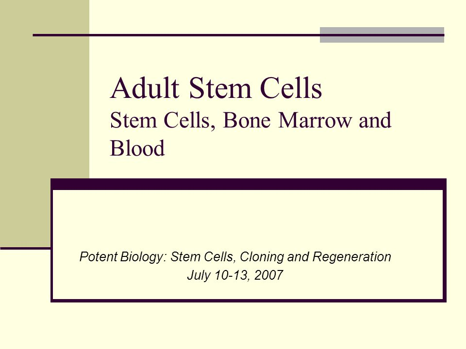 Adult Stem Cells Stem Cells, Bone Marrow and Blood