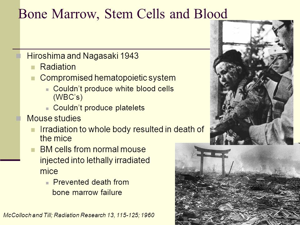 Bone Marrow, Stem Cells and Blood