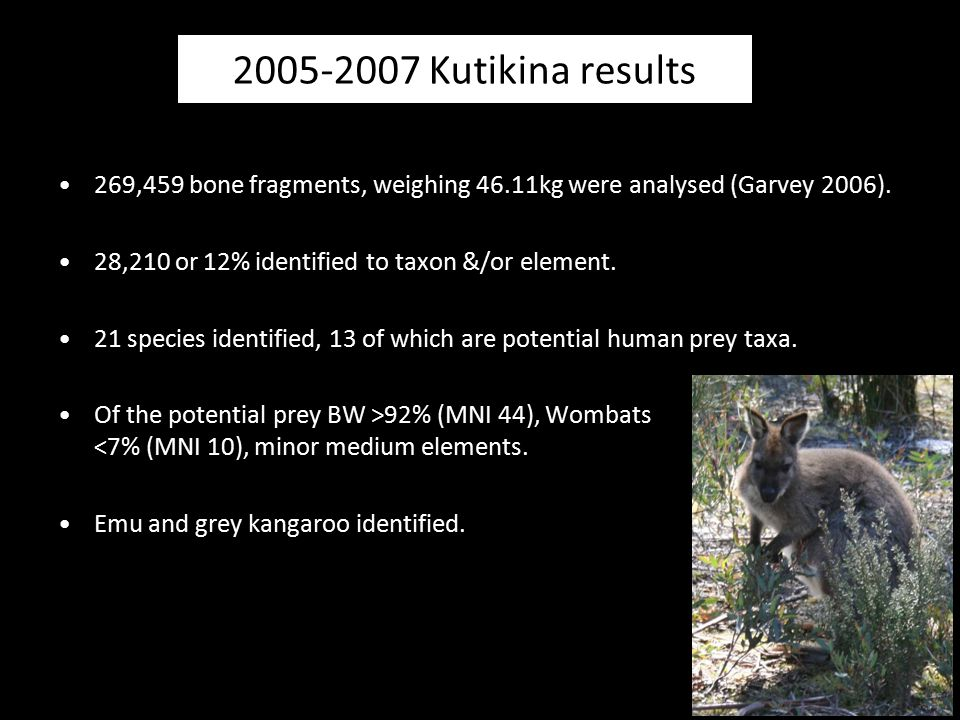 2005-2007 Kutikina results 269,459 bone fragments, weighing 46.11kg were analysed (Garvey 2006). 28,210 or 12% identified to taxon &/or element.