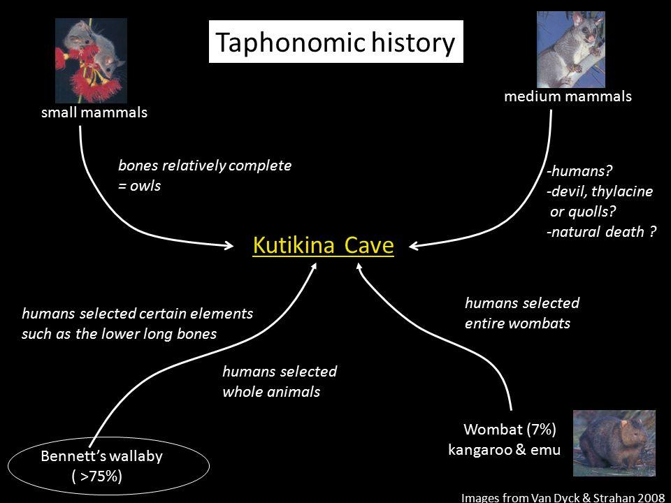 Taphonomic history Kutikina Cave medium mammals small mammals
