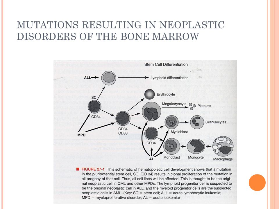 MUTATIONS RESULTING IN NEOPLASTIC DISORDERS OF THE BONE MARROW