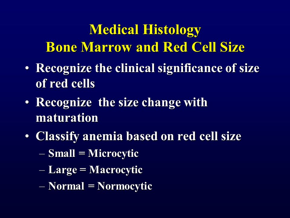 Medical Histology Bone Marrow and Red Cell Size