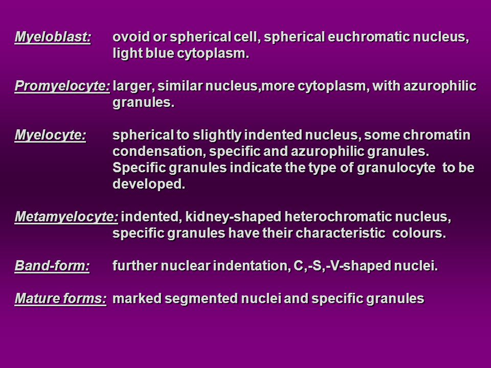 Myeloblast: ovoid or spherical cell, spherical euchromatic nucleus,